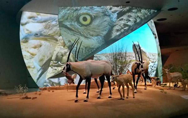 Parte de la integración audiovisual que BGL ha emprendido en el nuevo Museo Nacional de Qatar