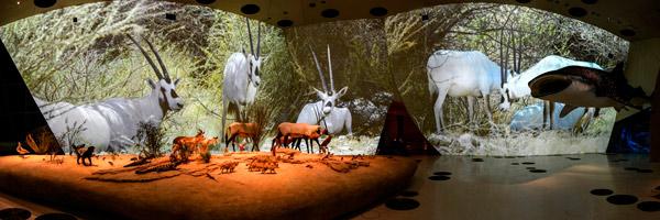 Sección de naturaleza con proyección 4K en el Museo de Catar